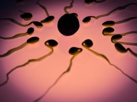 sperm egg fertilization visual hunt
