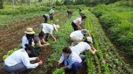 Curso de Agroecologia 4