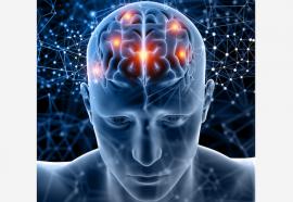 cerebro figura medica 3D freepik.es 2 creado por kjpargeter